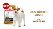 Jack Russell Adult Sensibilities
