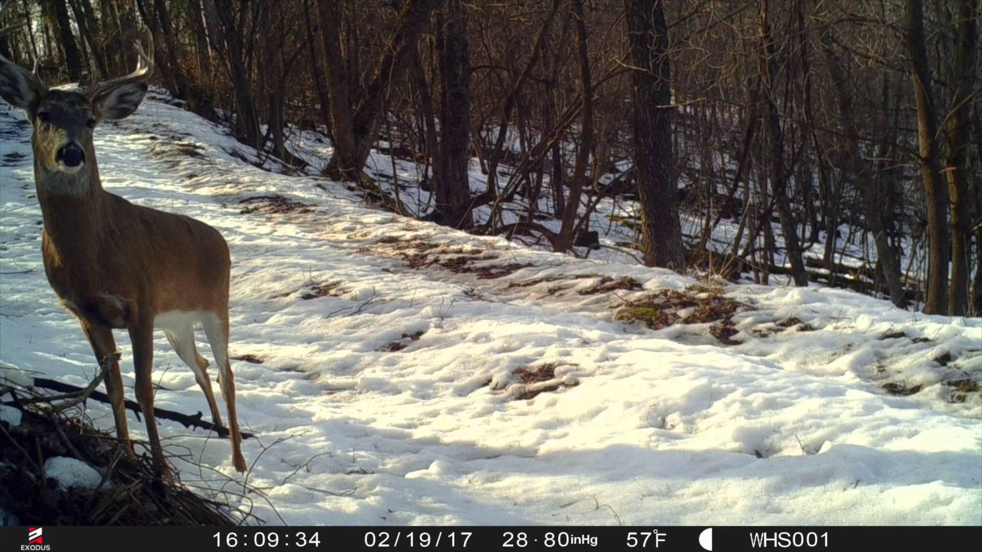 Low Impact Trail Cam Strategies