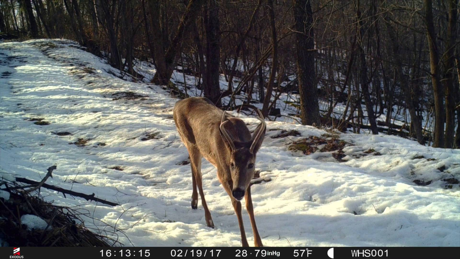 Trail Cam Battery Dependability & Battery Life