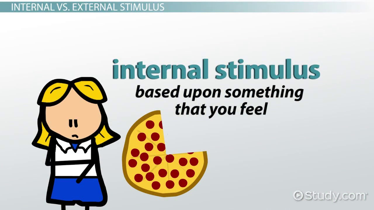 Stimulus anatomy definition