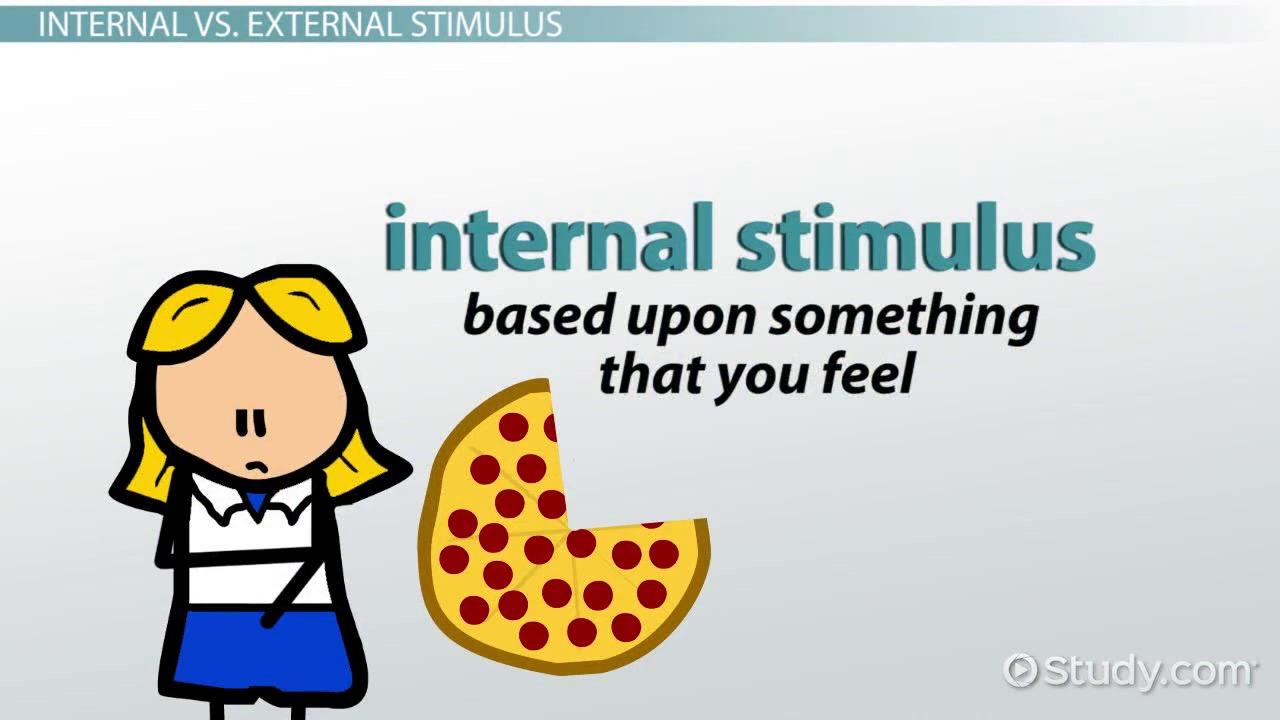 Stimuli: Definition & Examples - Video & Lesson Transcript   Study.com