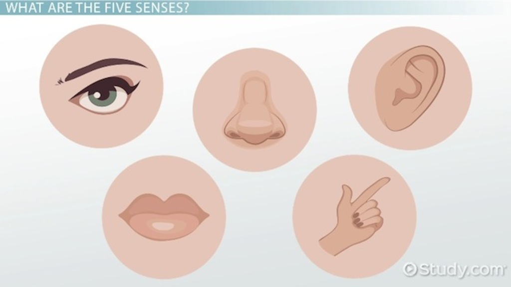 The Five Senses & Their Functions - Video & Lesson Transcript ...