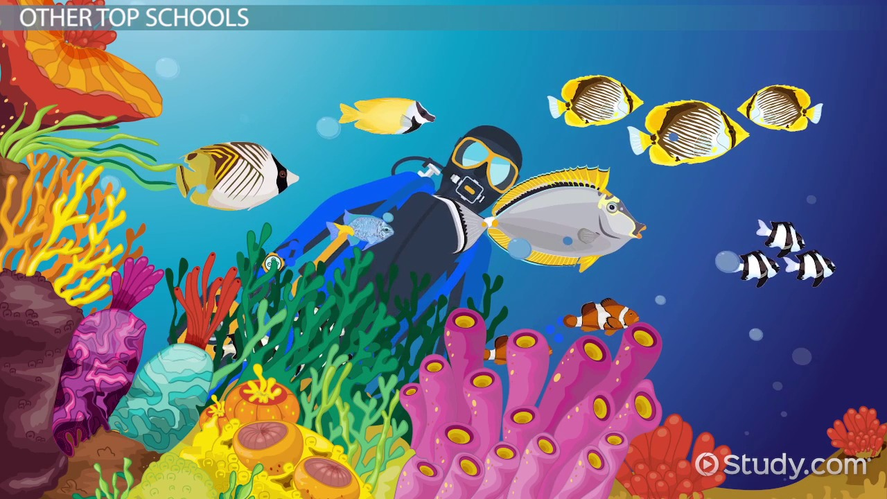 What collage would offer a PHD in Marine Biology and a good elementary education degree?