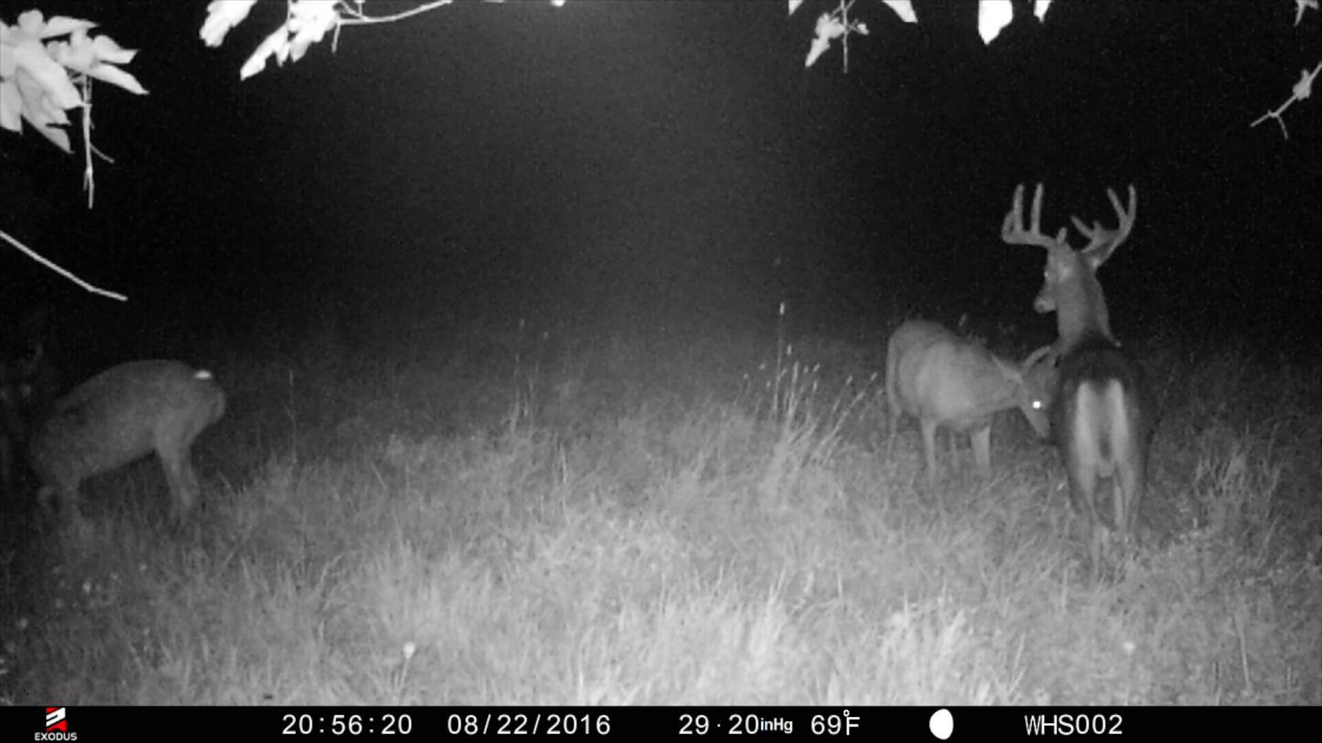 Exodus Trail Cam Review For Target Buck Results