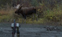 Inside & Out Season 5: Episode 4 - Yukon Moose Part 2