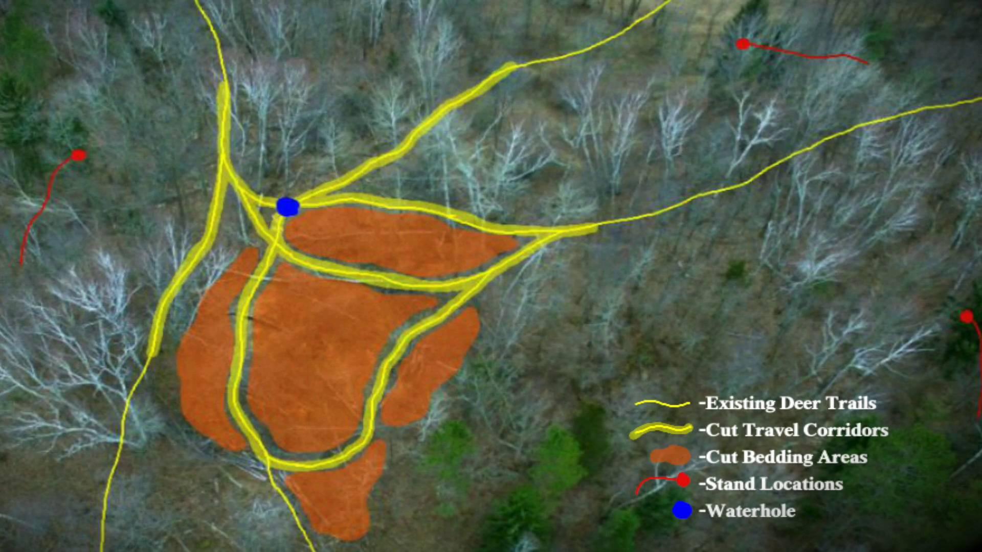 Precision Buck Hunting System for Advanced Deer Habitat