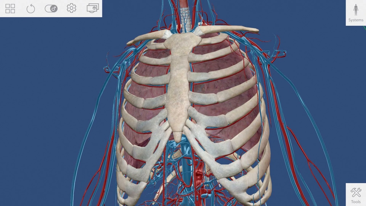 How To Human Anatomy Atlas Visible Body