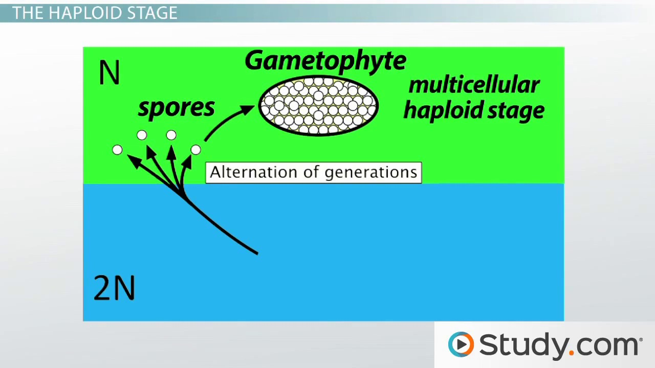 ap biology plant reproduction and growth homework help videos 1 alternation of generations the gametophyte and sporophyte