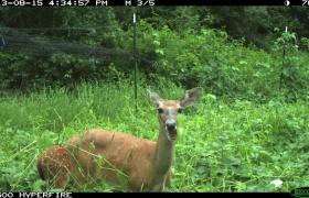 Let the Deer Eat! Summer Food Plots Before & After