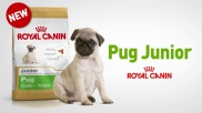 PUG JUNIOR BENEFITS (FR)