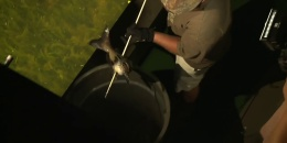 Inside & Out Season 5: Episode 1 - Alabama Bowfishing