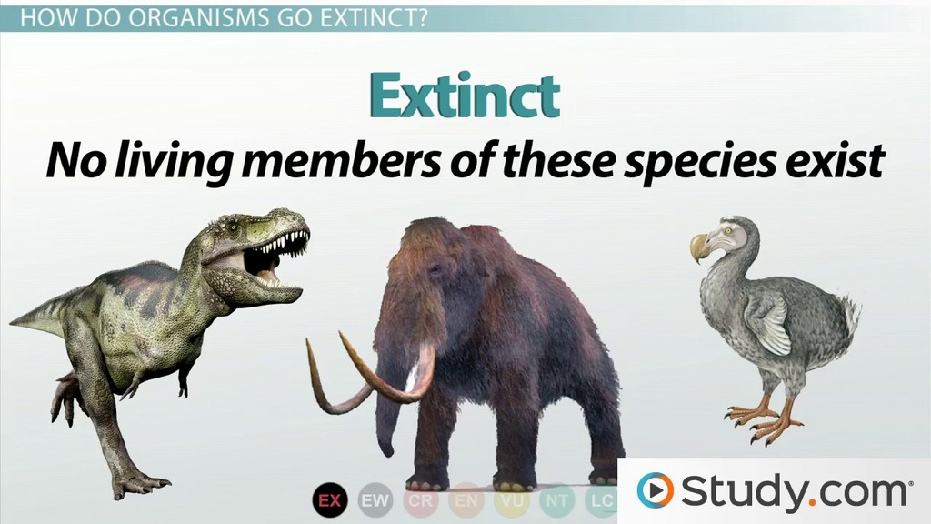 essay on extinct species essay on extinct species essay contest  differences between endangered species and threatened species differences between endangered species and threatened species video lesson