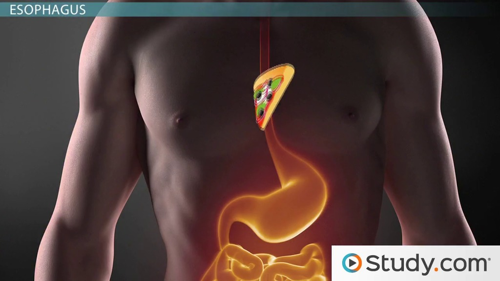 20 Reasons Why Your Stomach Hurts  Health