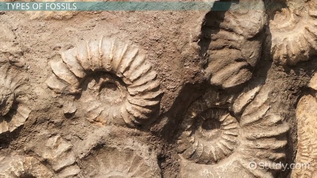 Fossil: Definition, Types, Characteristics & Examples - Video ...