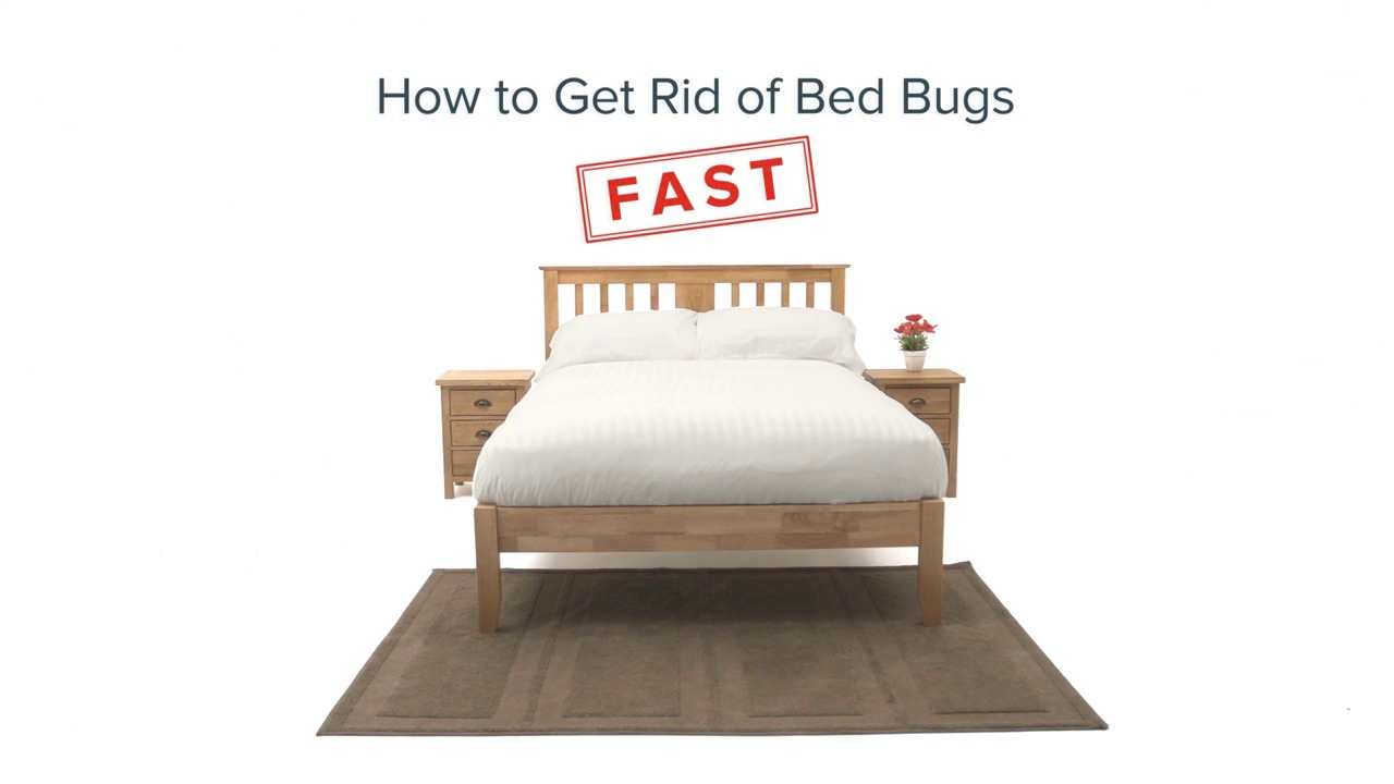 how to get rid of bed bugs   rentokil pest control