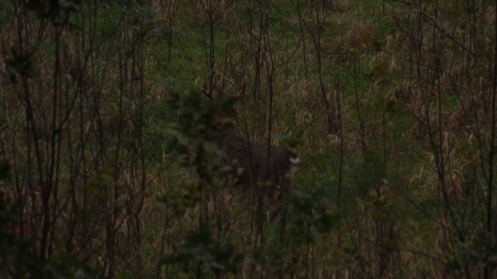 Whitetails By Design TV - Episode 10 - #1 Rule for Tracking a Wounded Whitetail