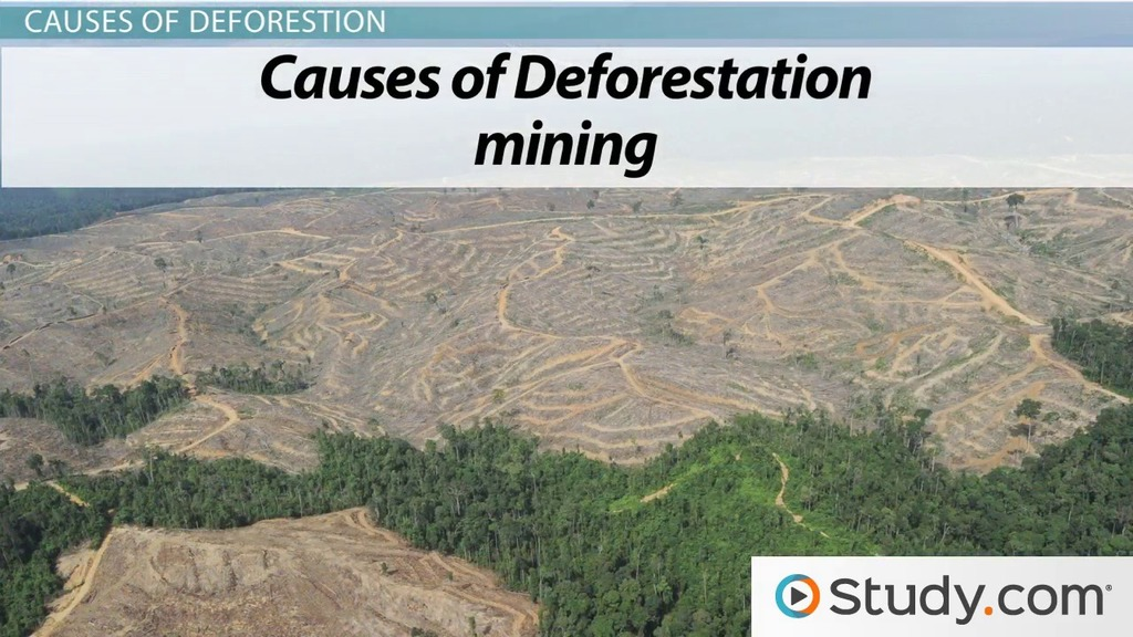 problem deforestation essays Deforestation another problem faced in the environment area is the problem of deforestation due to the increasing human population and the spread of urbanization  preview  harmful human.