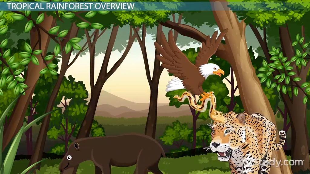 Tropical Rainforest Animal Adaptations - Video & Lesson Transcript ...