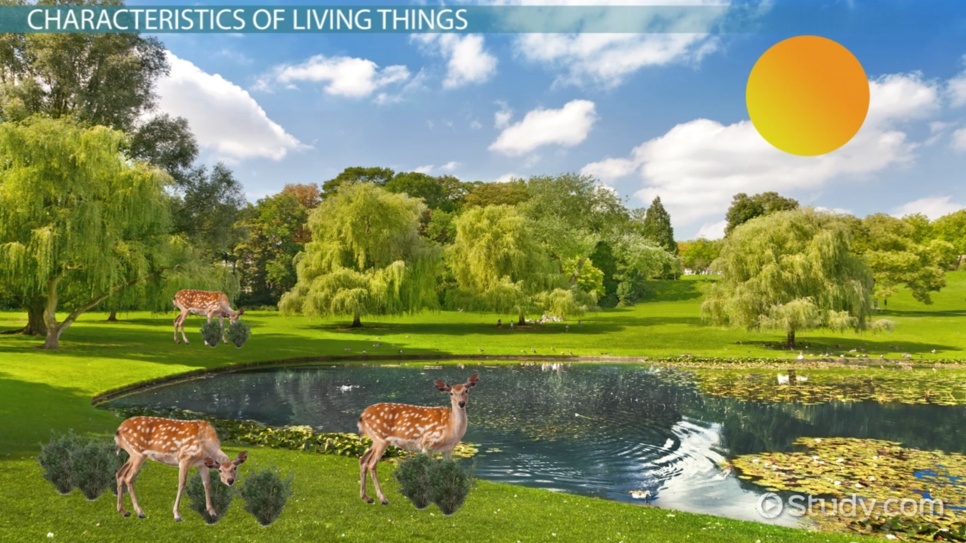 Characteristics of Living Things - Video & Lesson Transcript ...