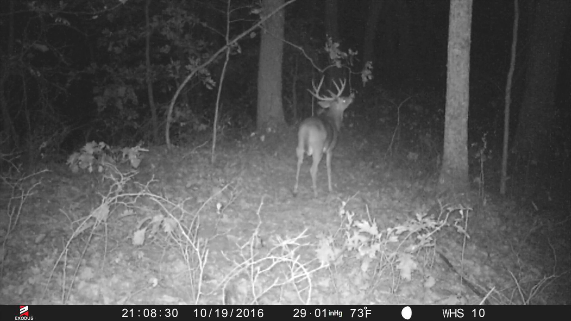 Whitetails By Design TV - Episode 11 - Hunting Mature Bucks On Public Land