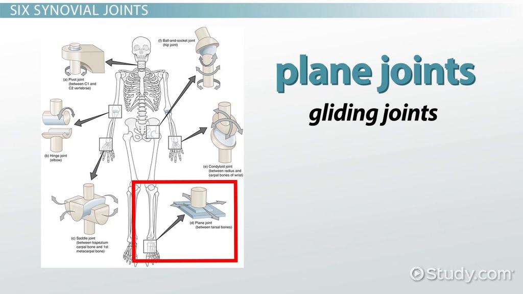 the six types of synovial joints: examples & definition - video, Human Body