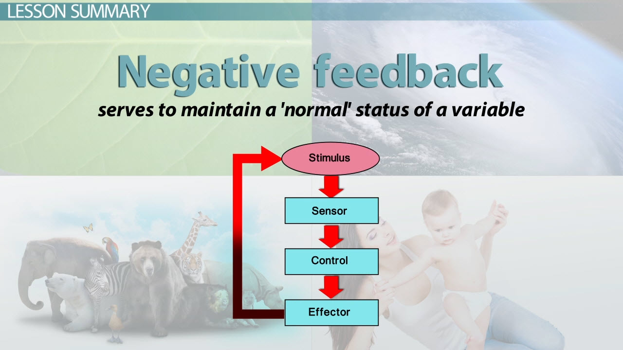 What is negative feedback in biology definition examples what is negative feedback in biology definition examples video lesson transcript study robcynllc Gallery